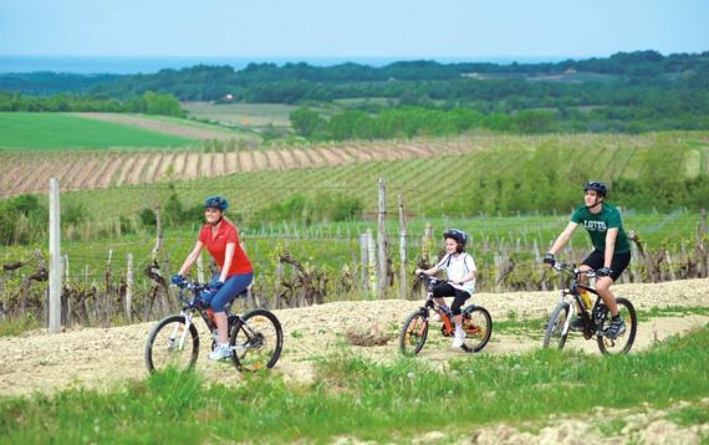 bike_istria_vineyard_original